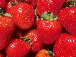 Chaplaincy strawberry fundraiser